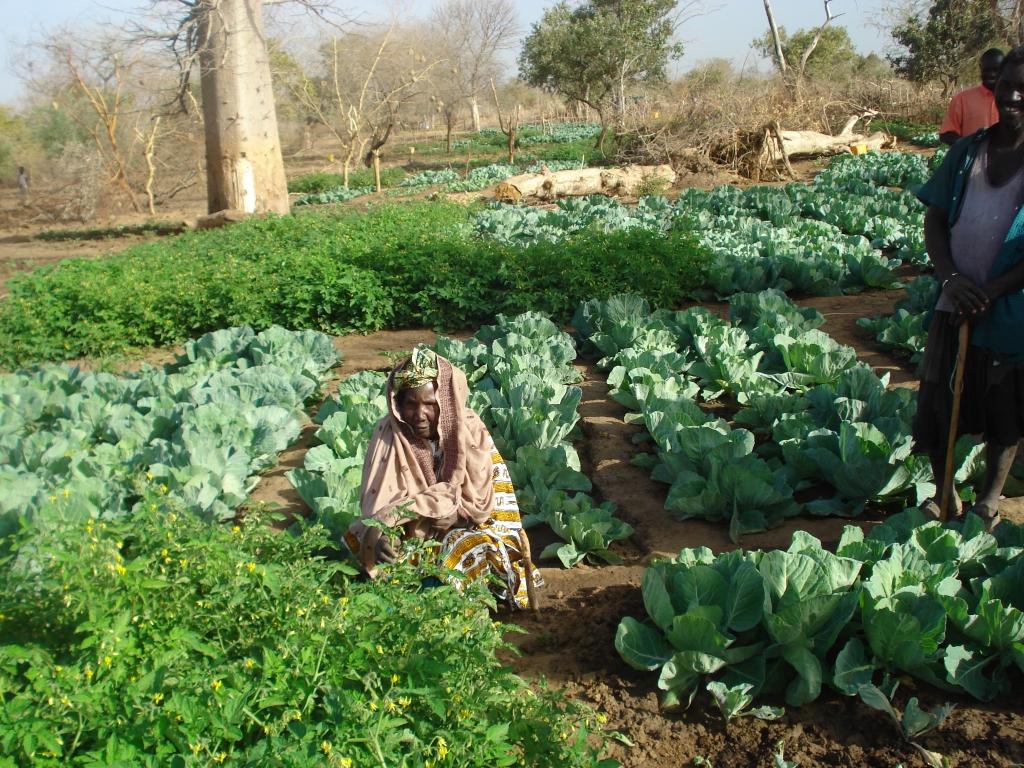 hydrolique agricole 1
